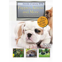 PC Treasures Moods of Nature: Puppies, Kittens and More (DVD)